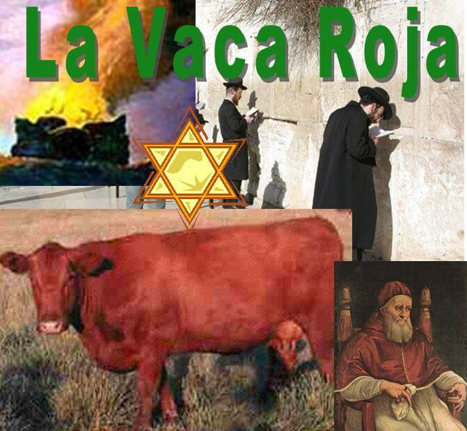 Nacimiento de vaca roja anuncia la inminente venida del Mesías afirman estudiosos