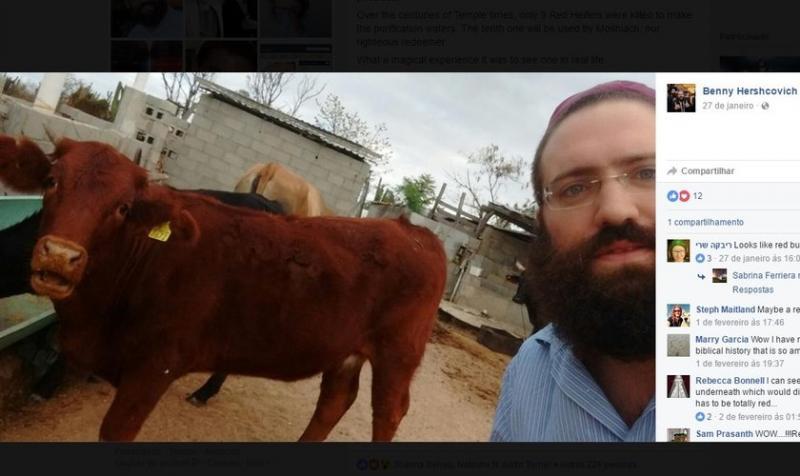 Rabino se emociona al ver 'vaca roja', que podría ser utilizado en Tercer Templo