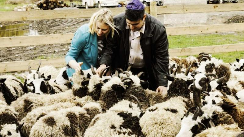 Código de la Torá: Llegada de 'ovejas Jacob' a Israel es señal del Mesías y el Tercer Templo