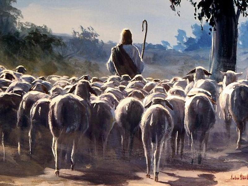 Devocional: Mis ovejas