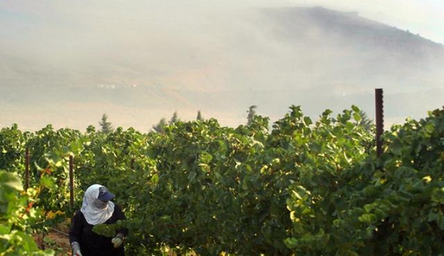 Arqueóloga descubre pruebas de historia bíblica de viña de Nabot