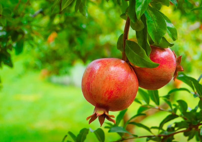 Devocional: Dando fruto