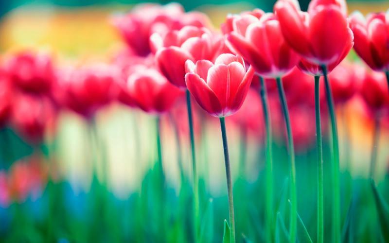 Devocional: Observando las flores