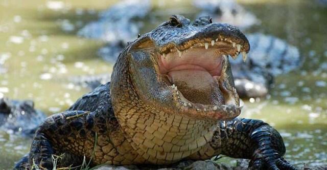 Pastor es devorado por cocodrilo mientras bautizaba en un lago de África