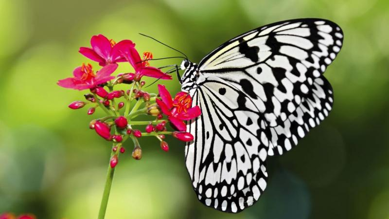 Devocional: Somos mariposas